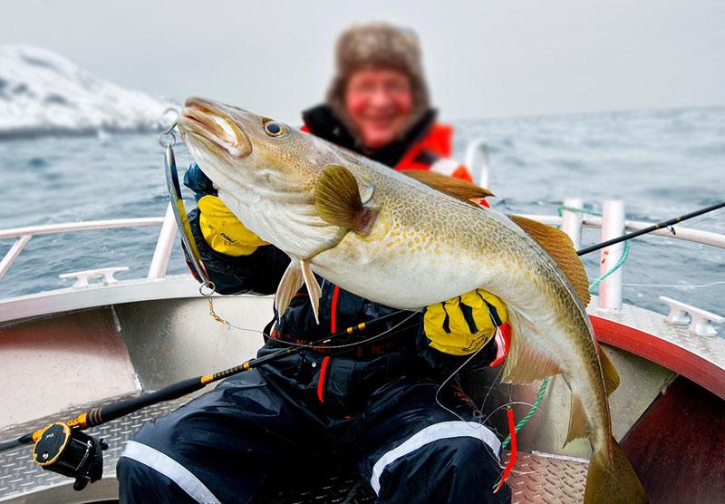 на что ловить треску на белом море видео